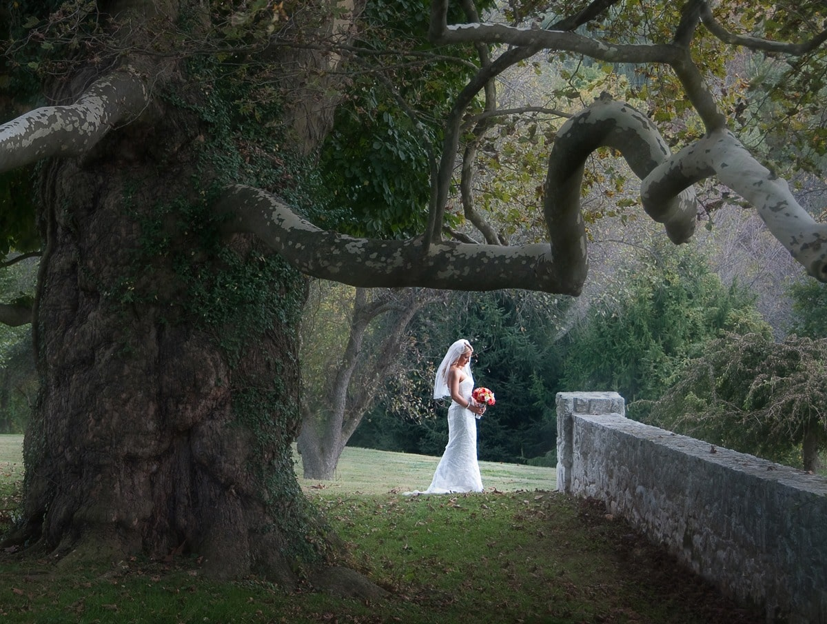bride with weeping willow