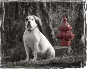 dog photography with hydrant